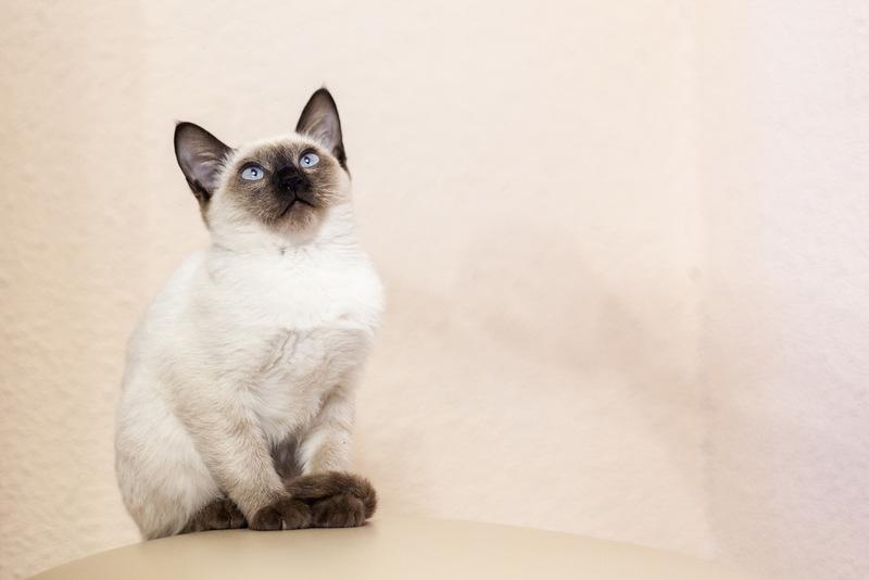 turn cat portrait into cartoon